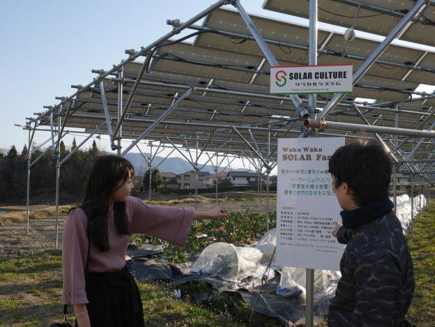 畑から電気と野菜を収穫する